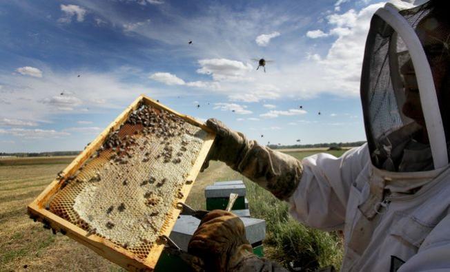 Cosecha de la miel. (Foto: Ical)