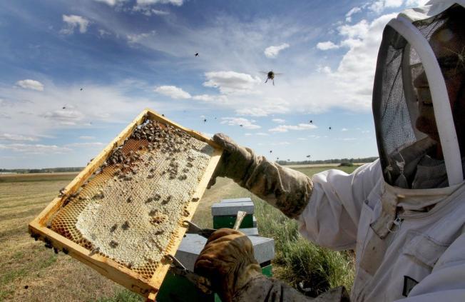 Un apicultor, junto a un panal de miel. (Foto: Bragimo)